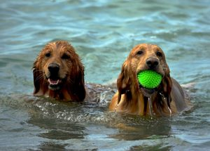 dogs-1642367_1920